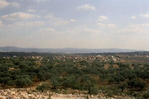 Olivos en territorio palestino muy cerca de los asentamientos israelíes en expansión. Foto: IRIN/Shabtai Gold