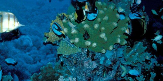 Arrecife de coral. Foto de archivo: Banco Mundial