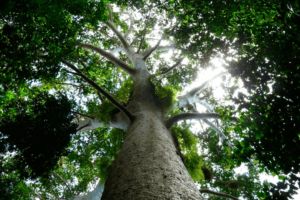 Los bosques juegan un rol fundamental en las políticas de lucha contra el cambio climático. Foto: FAO/Rudolf Hahn