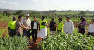 FAO/Alessandro Stelzer Un evento de Cooperación Sur-Sur de la FAO reúne a expertos Chinos con agricultores de Uganda.